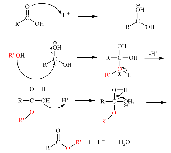 mekanisme reaksi esterifikasi