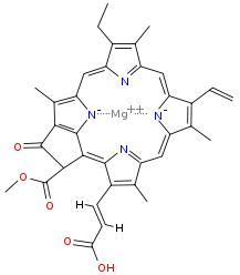 struktur klorofil