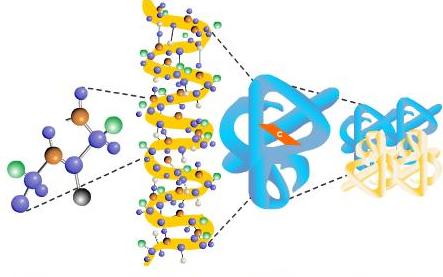 struktur protein primer sekunder tersier kuartener
