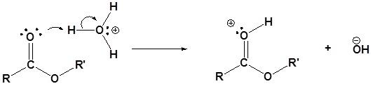 transesterifikasi katalis asam 1
